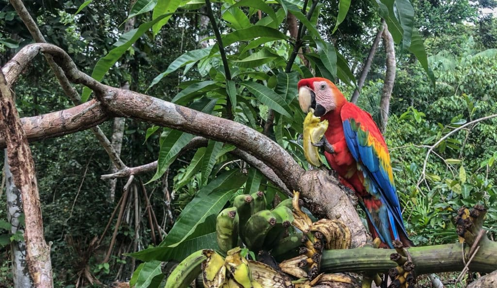 Amazing Parrots of The Amazon